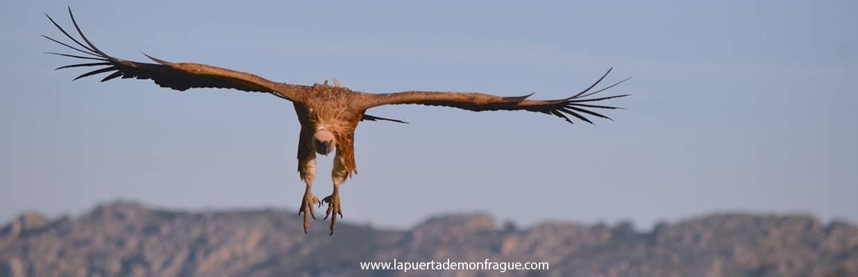 Birding en Monfrague