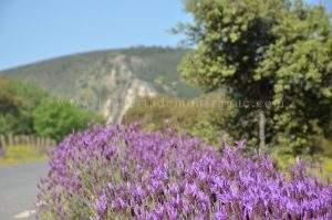 Primavera en Monfragüe