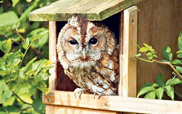 Las mejores cajas nido para pájaros para su jardín