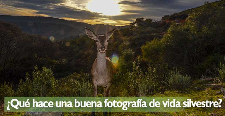 Qué hace una buena fotografía de vida silvestre