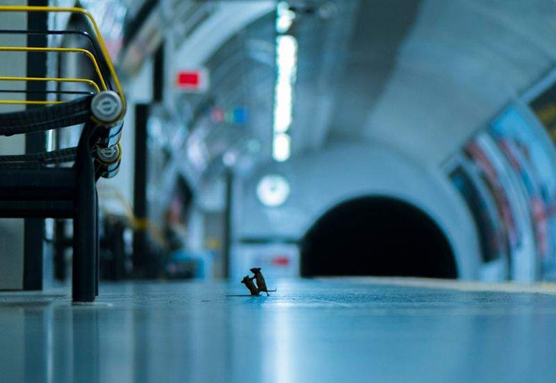 raton pelea metro londres