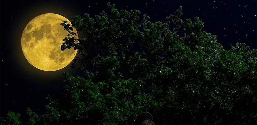Luna del Roble