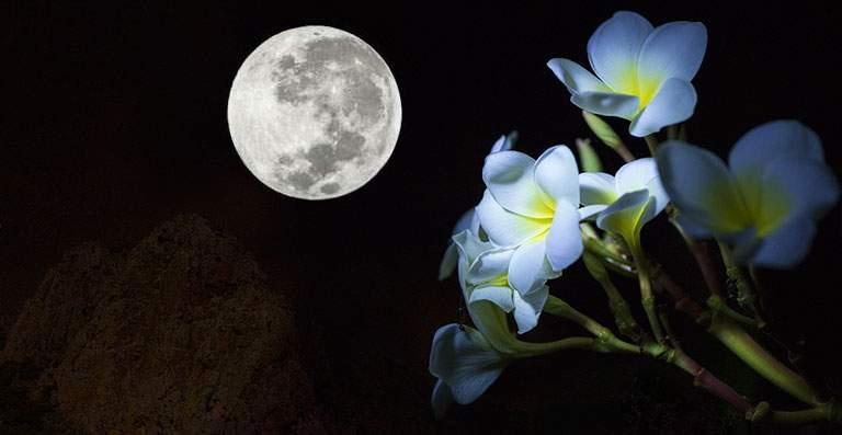 Luna Llena de las Flores
