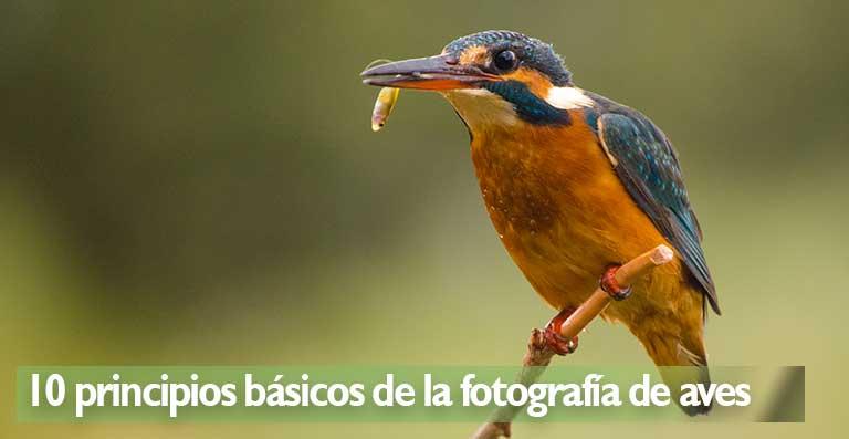10 principios básicos de la fotografía de aves