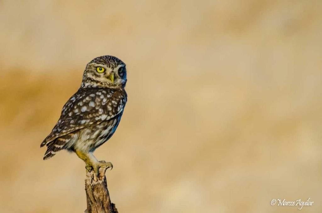 Consejos de fotografía de aves para principiantes - Enfoque