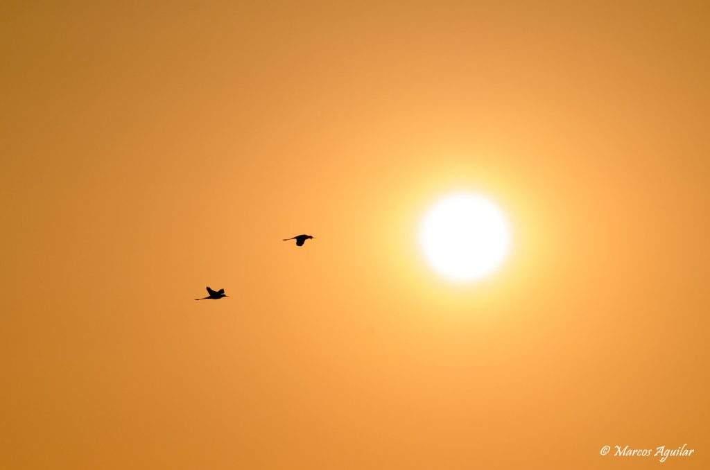 Consejos de fotografía de aves para principiantes