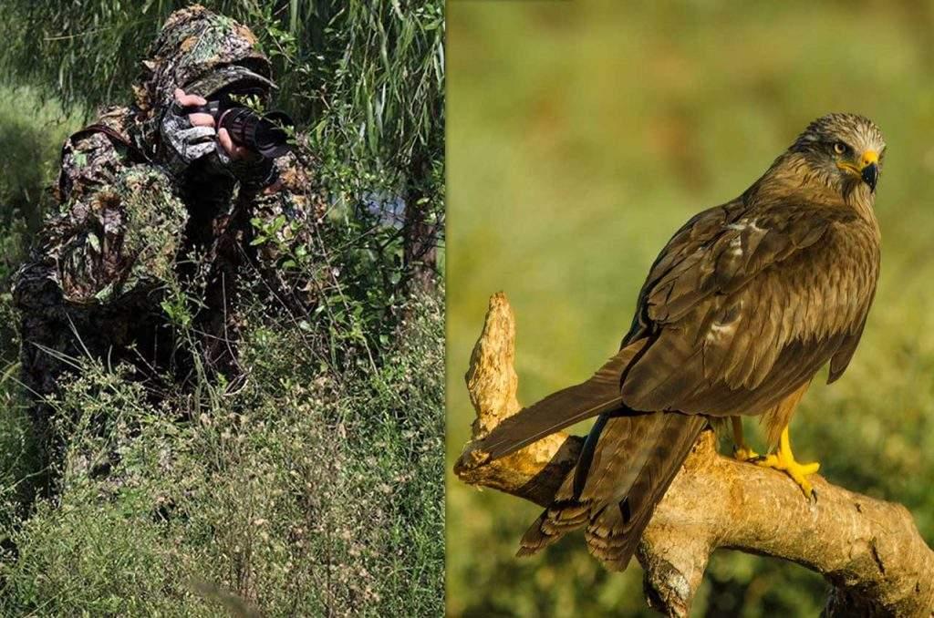 Consejos de fotografía de aves para principiantes momento