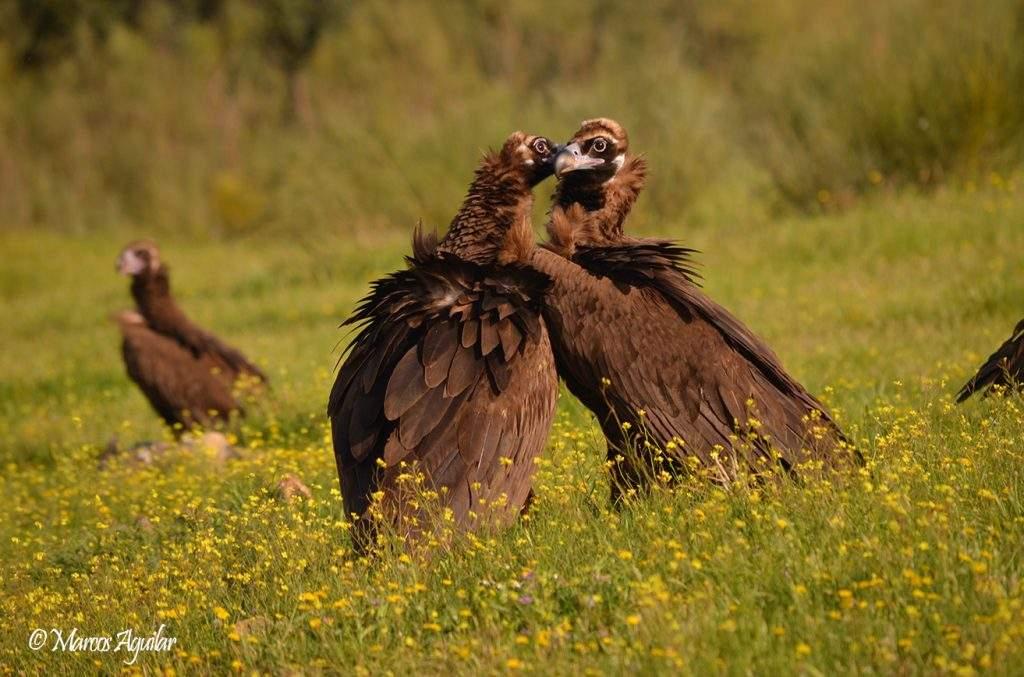 10 principios básicos de la fotografía de aves historia