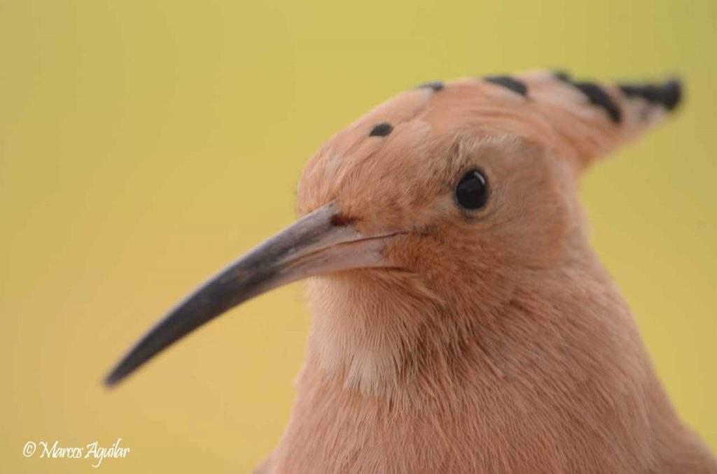 principios básicos de la fotografía de aves fondo