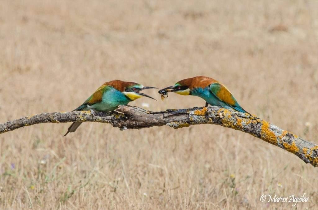principios básicos de la fotografía de aves