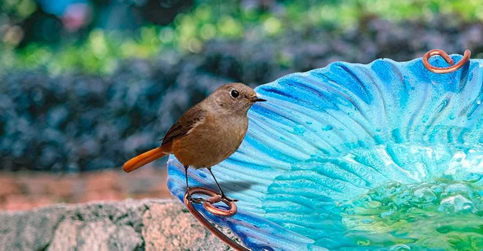 Comedero de pájaros de Cristal