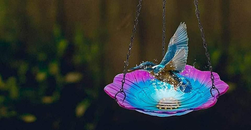 Baños de cristal para pájaro
