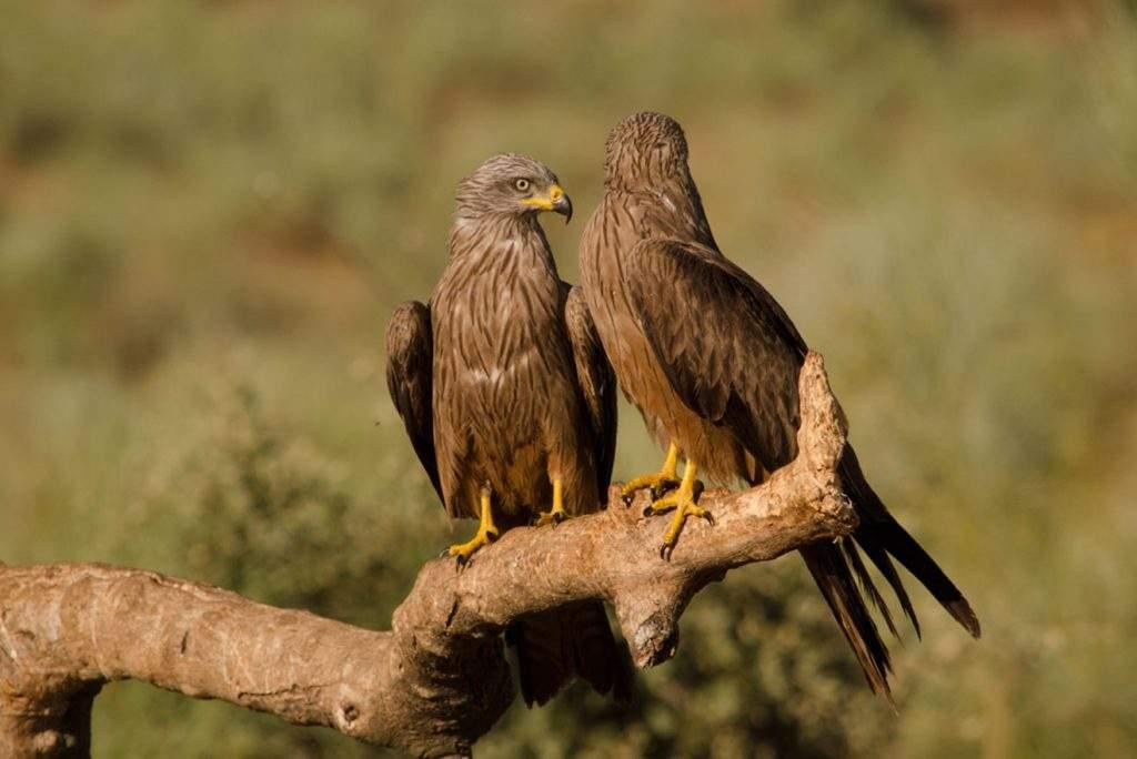 Observación de aves desde hide